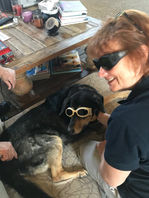Sadie getting cold laser therapy